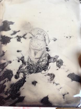 snow rabbit, quarter plate 2015